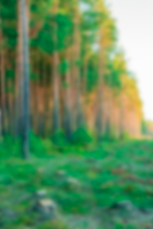 Green forest - soft lens bokeh image. Defocused background Stock fotó - 102174952