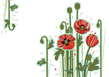 Wildflowers poppy on white background  Red flowers card Illustration