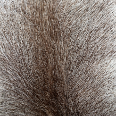 Close up of reindeer colored fur texture
