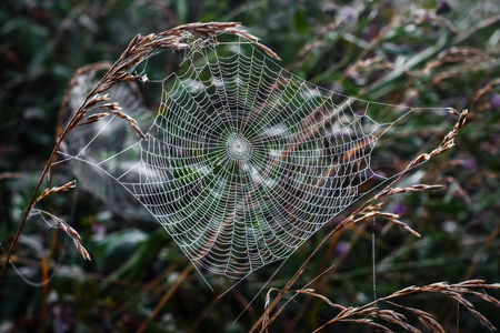 Spider web on grass backgroung  photo