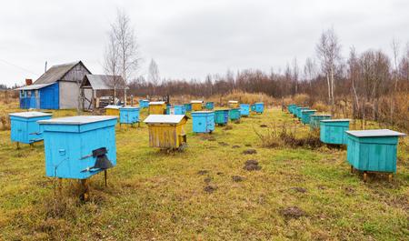 apiary: Apiary at autumn.