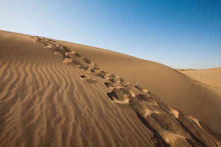 desert Stock Photo - 8351467