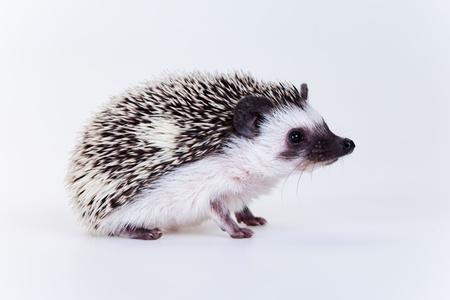 Cute hedgehog photo
