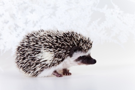 Cute hedgehog Stock Photo - 8405738