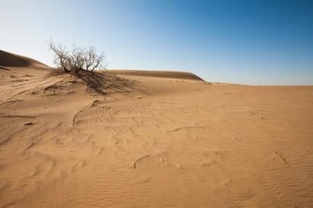 Wüste Standard-Bild - 8406087