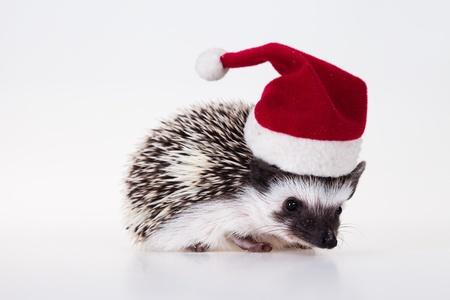 Weihnachten-Igel Standard-Bild