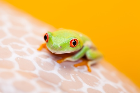 Green frog Stock Photo - 8551696