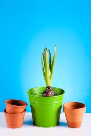 Gardening Stock Photo - 9026027