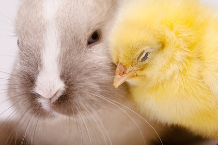Chick and bunny Stock Photo - 9174937