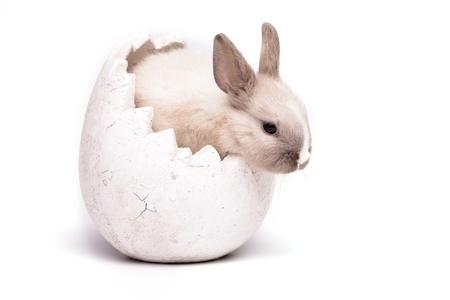 Bunny Stock Photo - 9172414