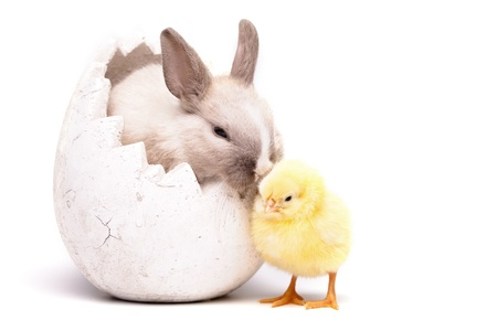 Chick und bunny