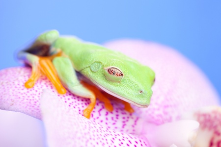 Green frog and flower photo