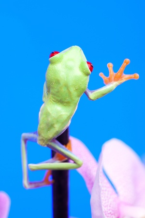 Green frog and flower