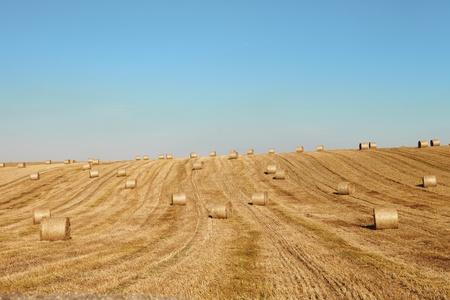 cosechadora: cosecha