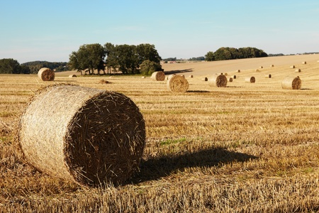 harvest  Standard-Bild