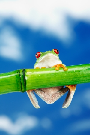 crazy frog: Green Frog with red eye