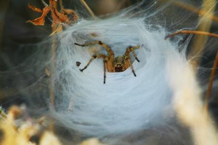 lurk: Spider