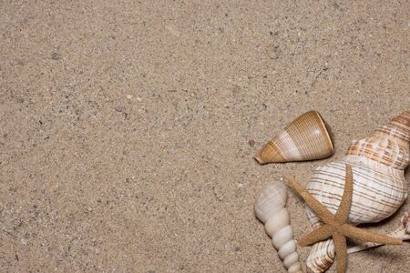 starfish and shells on the beach, vacation memories  photo