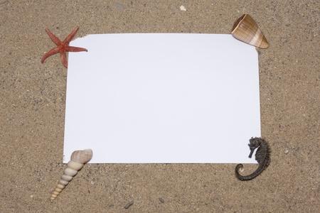 starfish and shells on the beach, vacation memories  photo