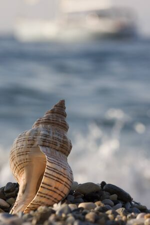 Seashell with boat photo