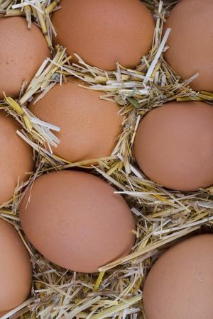Macro shoot of brown eggs at hay. Stock Photo - 11174578