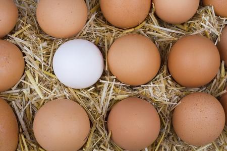 Macro shoot of brown eggs at hay. photo