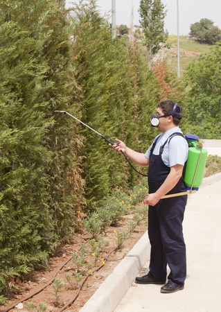 Man spraying insects- pest control photo