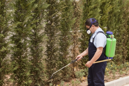 pest control: Man spraying insects- pest control