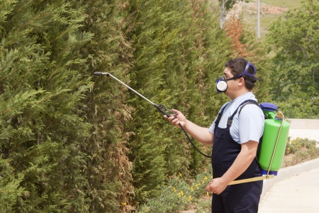 Man spraying insects- pest control Stock Photo