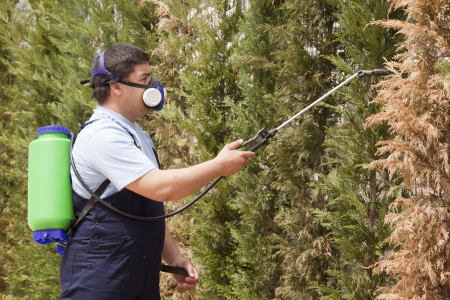 exterminator: Man spraying insects- pest control