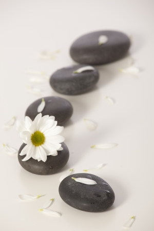 Spa still life with white flowers  photo