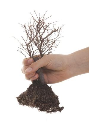 arbol de problemas: mano que sostiene árbol seco sobre fondo blanco