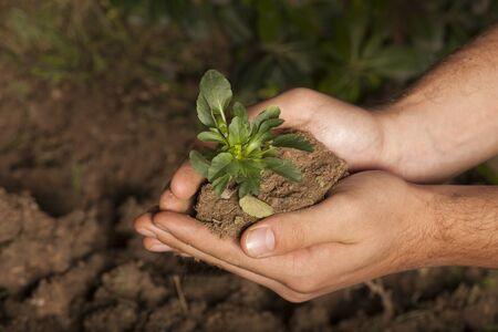 nurture: plant in hands grass background Stock Photo