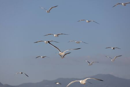 Scenic View of Seagulls above Sea Against Sky Stock Photo