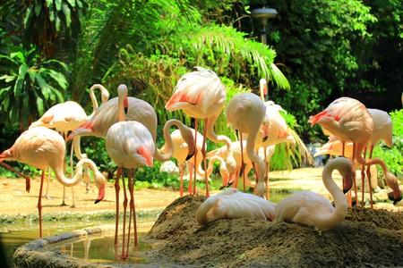flamenco ave: Flamingo ave
