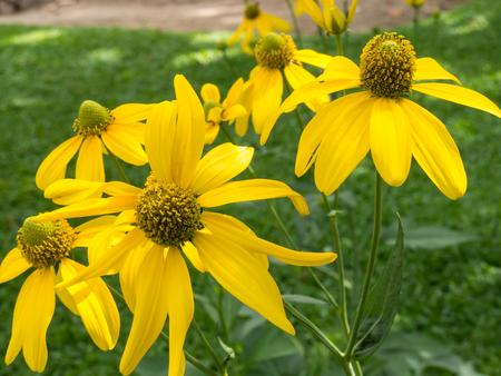 pedicel: Yellow Flower Stock Photo
