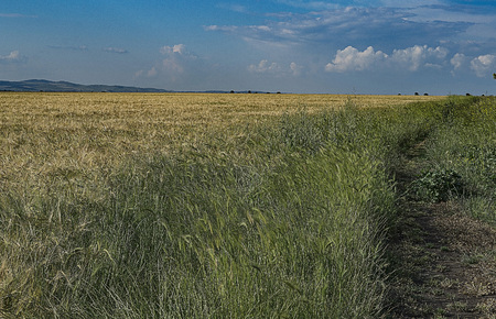 crop margin: Rye field and country road Stock Photo