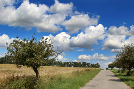 Landscape with path, trees and blue sky with white clouds  photo