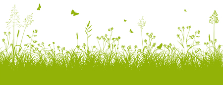 green banner: Fresh Green Grass Landscape with Herbage and Butterflies in Springtime on White Background - Vector Illustration