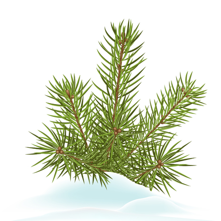 wintertime: Fir Branch Decoration Stuck in Snow - Cold Wintertime - Spruce Branches with Snowy Ground on White Background - Winter Season Vector Illustration