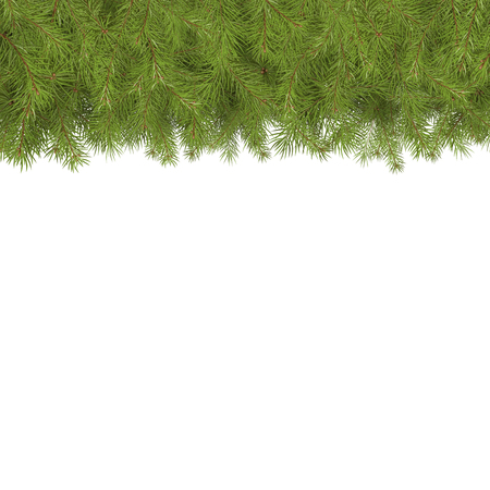 Arranged Green Fir Tree Branches - Fir Branch Illustration with Copy Space for Own Design. Firs with Needle at Top and Bottom. Stockfoto