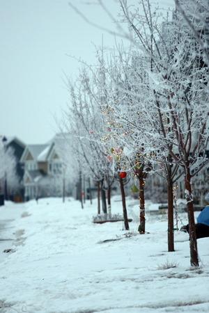 condensacion: Edmonton niebla que se congel� y cre� un buen condensaci�n en los �rboles