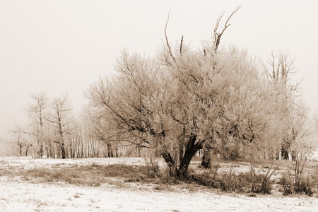 Edmonton Fog that froze and created a nice condensation on the trees Imagens