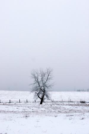 condensacion: Edmonton niebla que se congeló y creó un buen condensación en los árboles
