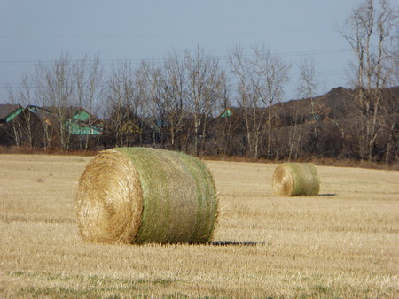 canada agriculture: A photo of a hay bale in a farm in Alberta