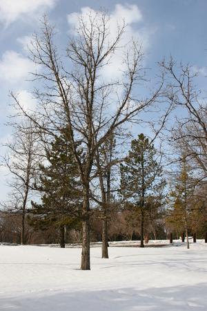 legislature: Edmonton Winter