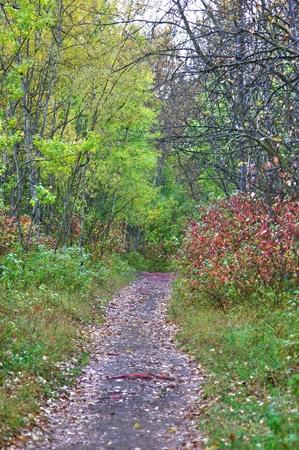 riverside tree: Edmonton Trails Stock Photo
