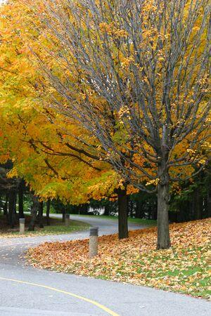 ottawa: Ottawa colorful trees during fall