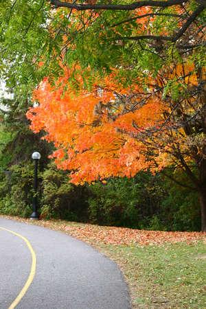 ottawa: Ottawa colorful tree during fall