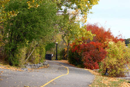 Ottawa colorful tree during fall